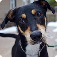 Adopt A Pet :: Ollie - ADOPTION PENDING - CONGRATS MORALES FAMILY - Hewitt, NJ
