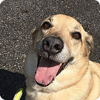 Adopt A Pet :: Milly - Buckeystown, MD