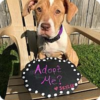 Adopt A Pet :: Skylee - Grand Rapids, MI