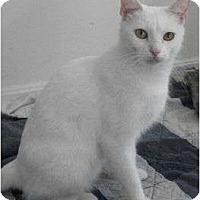 Adopt A Pet :: Gracie - Reston, VA