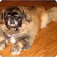 Adopt A Pet :: Mr. Bo Jangles - Mays Landing, NJ
