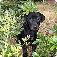 Adopt A Pet :: Cooper - In CT! - Adamsville, TN