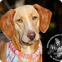 Adopt A Pet :: TESSIE - Albany, NY