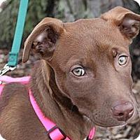 Adopt A Pet :: Penny - Louisville, KY