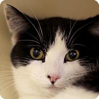 Adopt A Pet :: Luxi - Chicago, IL