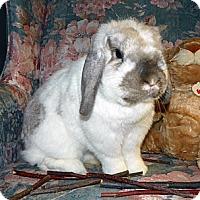 Adopt A Pet :: Albert - North Gower, ON