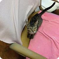 Adopt A Pet :: Reva - Lake Charles, LA