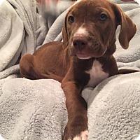 Adopt A Pet :: Emerel - Lewisville, IN