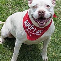 Adopt A Pet :: Sasha - Salisbury, NC