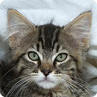 Adopt A Pet :: Samantha M - Sacramento, CA