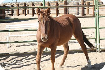 Mustang Mix for adoption in Lancaster, California - Zuma