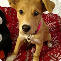 Adopt A Pet :: Roseanna - Knoxville, TN