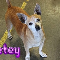 Adopt A Pet :: Petey #932 - Nixa, MO