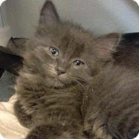 Adopt A Pet :: Lincoln - Brainardsville, NY