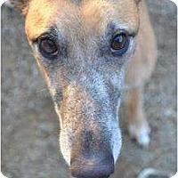 Adopt A Pet :: Buck (HS Buck) - Chagrin Falls, OH