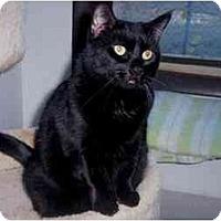 Adopt A Pet :: Daisy - Quincy, MA