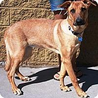 Adopt A Pet :: Buttercup - Gilbert, AZ