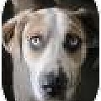 Adopt A Pet :: Bubba - N. Fort Myers, FL
