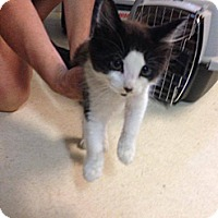 Adopt A Pet :: Pepe - Lancaster, MA