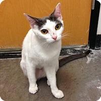 Adopt A Pet :: Sweetness - Gilbert, AZ