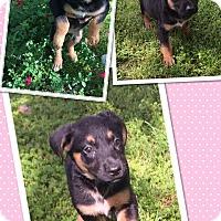 Adopt A Pet :: josefina - Scottsdale, AZ