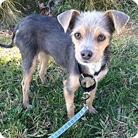 Adopt A Pet :: Grayson - Mission Viejo, CA