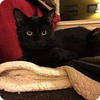 Adopt A Pet :: Bobby - Valley Park, MO