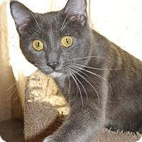 Adopt A Pet :: Miller - Chicago, IL