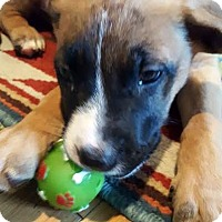 Adopt A Pet :: Fisbee-Adopted! - Detroit, MI