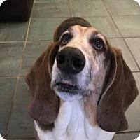 Adopt A Pet :: Stanley (March 2017) - Cincinnati, OH
