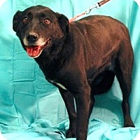 Adopt A Pet :: Allie - New Roads, LA