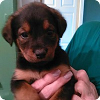 Adopt A Pet :: Adelle - Munford, TN