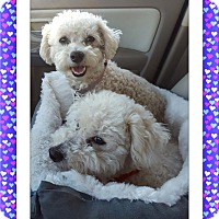 Adopt A Pet :: Max and Maggie - OK - Tulsa, OK