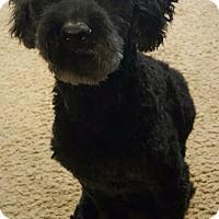 Adopt A Pet :: Ronin - Detroit, MI