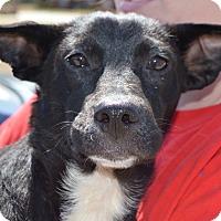 Adopt A Pet :: Cooper - Seabrook, NH