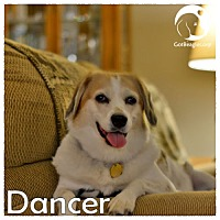 Adopt A Pet :: Dancer - Novi, MI