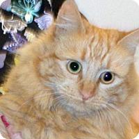 Adopt A Pet :: Kittie - Wildomar, CA