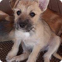 Adopt A Pet :: Cody - San Diego, CA