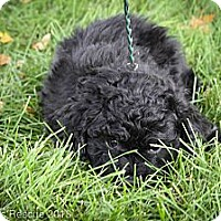 Adopt A Pet :: Artichoke - Broomfield, CO