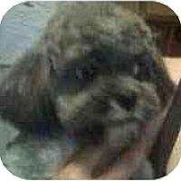 Adopt A Pet :: Marmalade - Phoenix, AZ