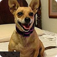 Adopt A Pet :: Sweet Girl - Fowler, CA