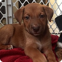 Adopt A Pet :: Jemma - Miami, FL