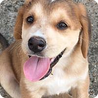 Adopt A Pet :: Parker - Richmond, VA