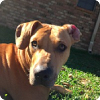 Adopt A Pet :: Butch - Walker, LA