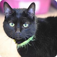 Adopt A Pet :: Izzy - Byron Center, MI