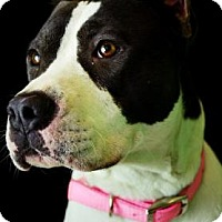 Adopt A Pet :: Sasha - Fort Smith, AR