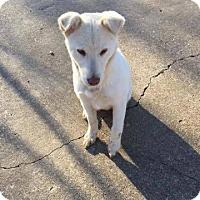 Adopt A Pet :: Luna - Nesbit, MS