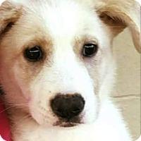 Adopt A Pet :: Hannah - Saddle Brook, NJ
