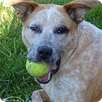 Adopt A Pet :: Jordan - Marlinton, WV
