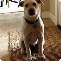 Adopt A Pet :: Katrina - Houston, TX